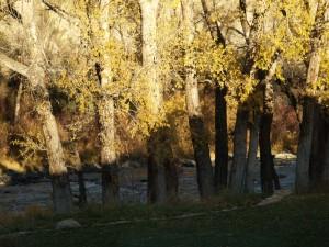 Eagle River at Diamond Star Ranch